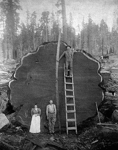 Chérie, j'vais scier du bois!
